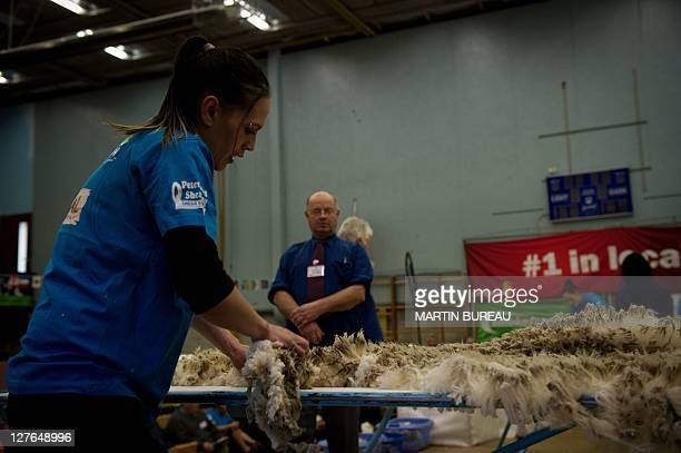 A competitor checks the wool during the 50th New Zealand International Merino Shearing championships on September 29 2011 at the Molyneux Park...