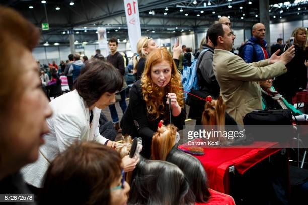 A competitor prepaires the dog of the breed Yorkshire Terrier to present them to a jury at the World Dog Show 2017 on November 11 2017 in Leipzig...