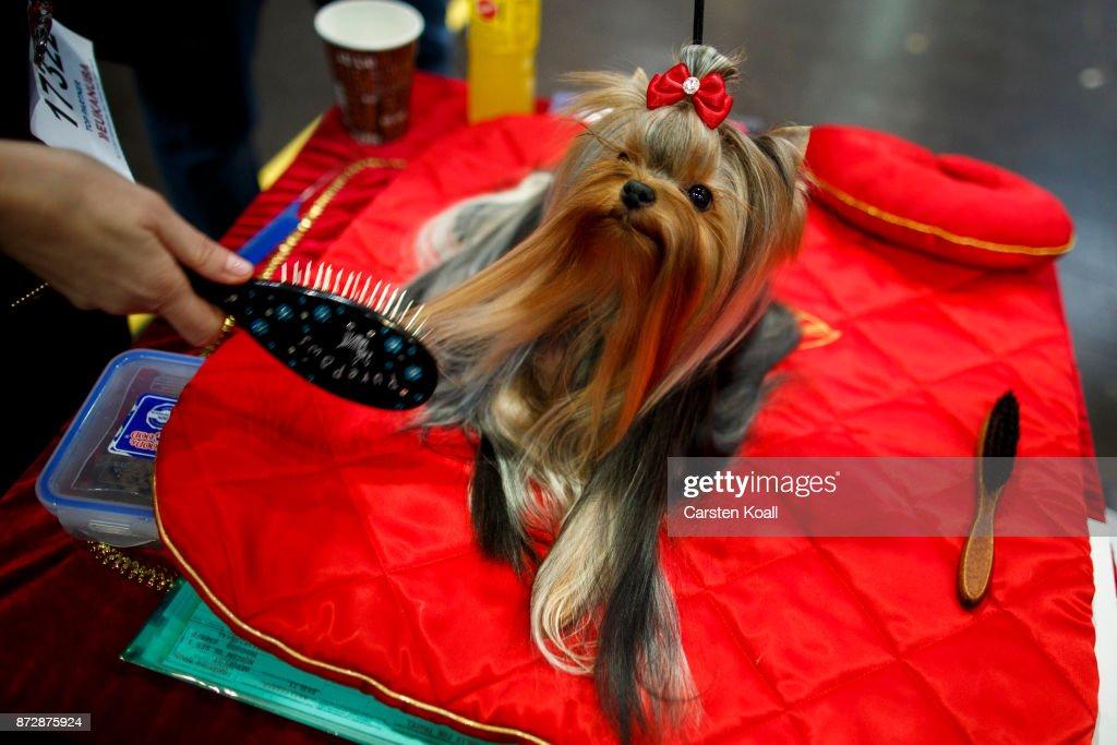 World Dog Show 2017 In Leipzig : News Photo