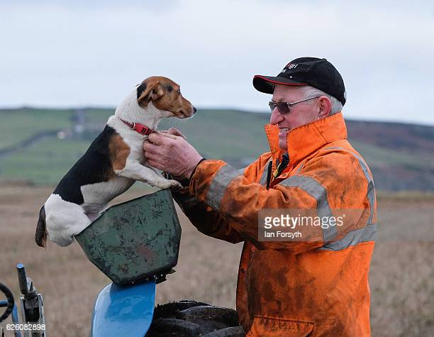 Competitor secures his Jack Russell terrier dog to his tractor during the annual ploughing match on November 27, 2016 in Staithes, United Kingdom....