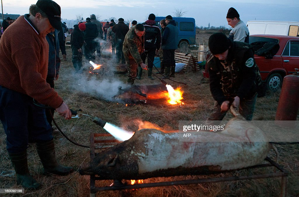 Competitors butcher pigs during the Pigs Carvers Festival in the Transcarpathian village of Gecha, some 800 km from the capital Kiev on January 26, 2013. Some 26 teams of butchers from Ukraine, Hungary and Serbia, the countries who cultivate pig-breeding, took part in this traditional competition. Each team has to kill a pig, butcher the carcass and prepare a variety of dishes made from the pork.
