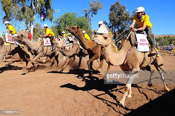 Competitors jostle for position during the 2011 Camel Cup camel racing event at Alice Springs on July 9 2011 AFP PHOTO