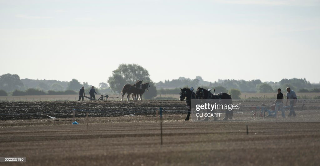 BRITAIN-AGRICULTURE-LIFESTYLE-PLOUGHING-OFFBEAT : News Photo
