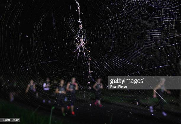 Competitors runs past a Spider's web during Nike She Runs The Night at Centennial Park on May 3 2012 in Sydney Australia