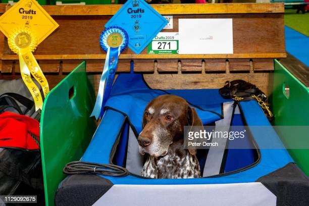 Competitors wait with their dogs during Crufts at the National Exhibition Centre on March 7, 2019 in Birmingham, England.