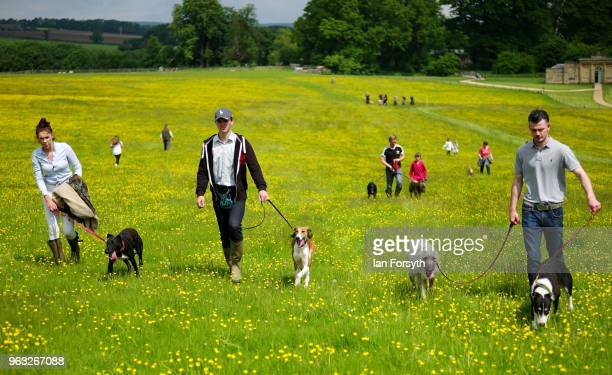 Competitors walk back across a field after competing in the lurcher race during the Duncombe Park Country Fair on May 28 2018 in Helmsley England Set...