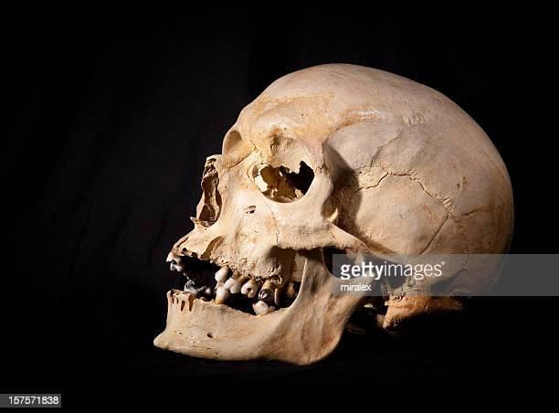 Complete Human Skull