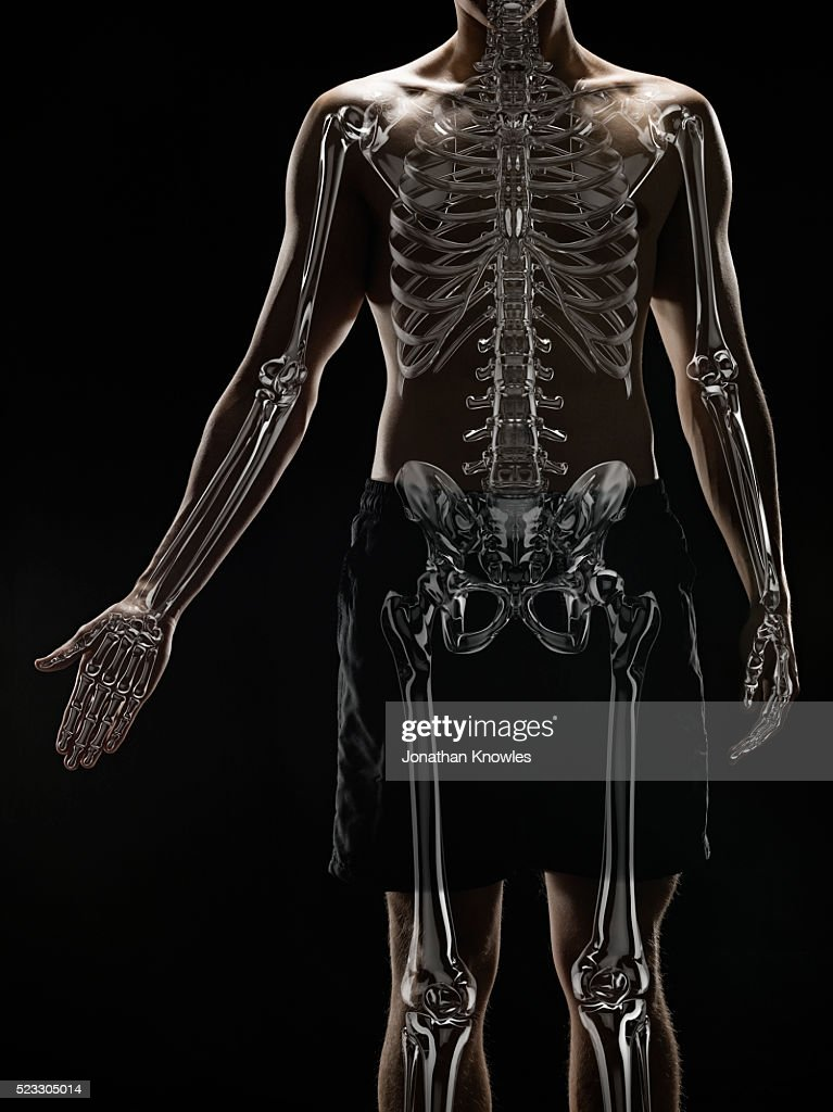 Rib Cage Stock Photos And Pictures Getty Images