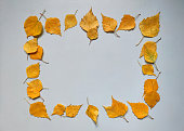 composition autumn leaves frame made bright