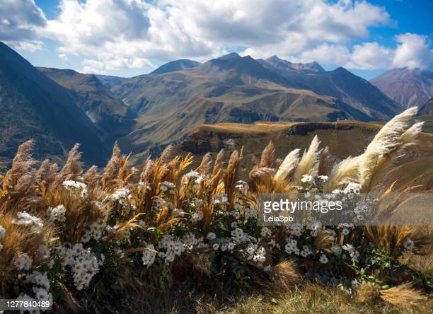 composition of flowers against the background of the caucasus mountains - コーカサス山脈 ストックフォトと画像