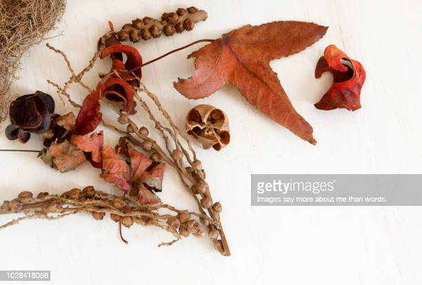 a composition with autumnal pieces such as leaves, branches and seeds. still life. - november background stock photos and pictures