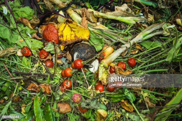 Compost with rotting grass and vegetables