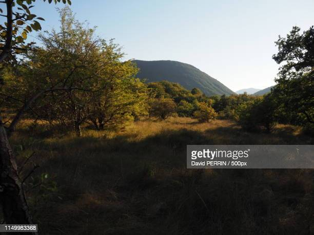 comps forest () france - comps stock photos and pictures