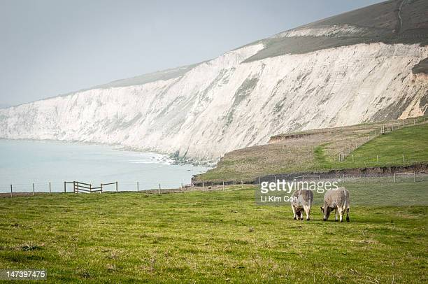 compton bay, isle of wight - compton bay isle of wight stock pictures, royalty-free photos & images