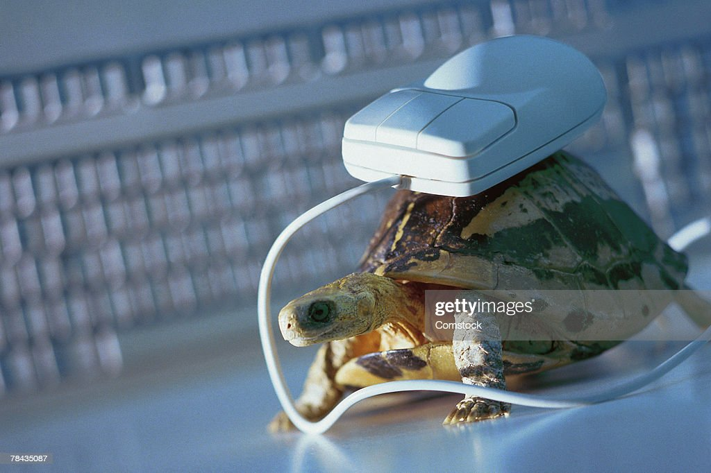 Computer mouse on top of tortoise : Stockfoto