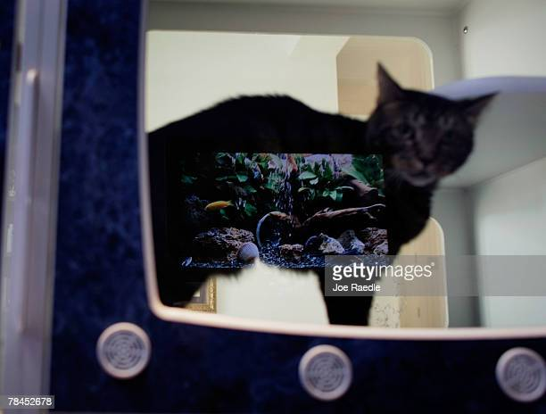 A computer screen displaying a fish tank is seen reflected in the glass of a cats condo in Chateau Poochie the luxury hotel for dogs and cats...