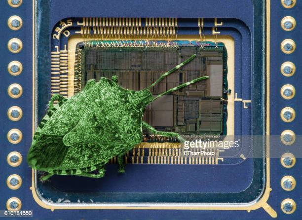 computer software bug - bright green insect sitting on computer microprocessor - computer bug stock photos and pictures