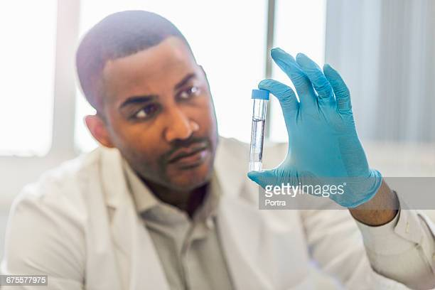 concentrated chemist examining chemical sample - test tube stock pictures, royalty-free photos & images