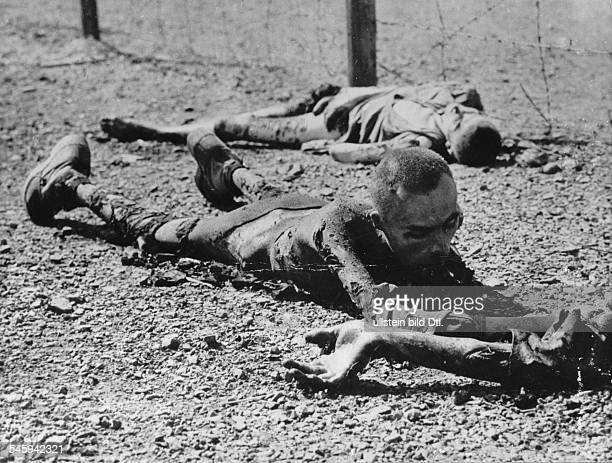 Concentration camp victims in a concentration campnear LeipzigBefore the SS abondoned this campthe inmates were shot resp gassed andthe barracks were...