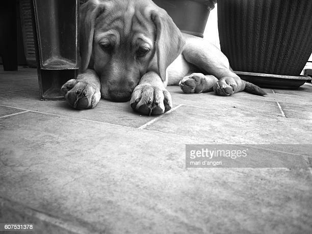 concentration - black and white instant print stock pictures, royalty-free photos & images