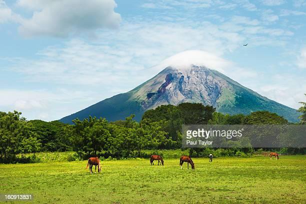 concepcion volcano with grazing horses - nicaragua fotografías e imágenes de stock