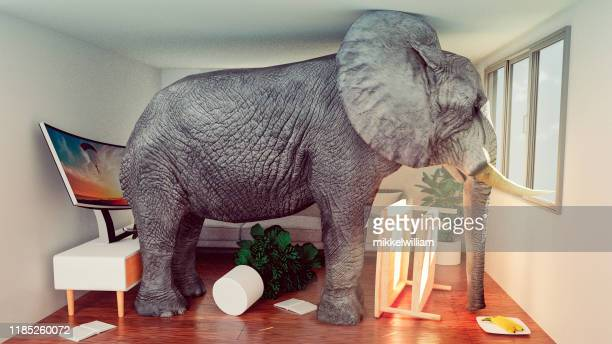 concept image of elephant stuck in a small living room and looking to get out - damaged stock pictures, royalty-free photos & images