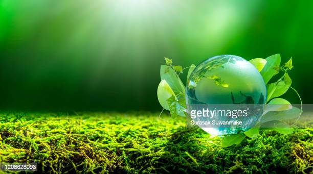 concept of earth protection day or environmental protection hands to protect the growing forest - 持続可能な暮らし ストックフォトと画像