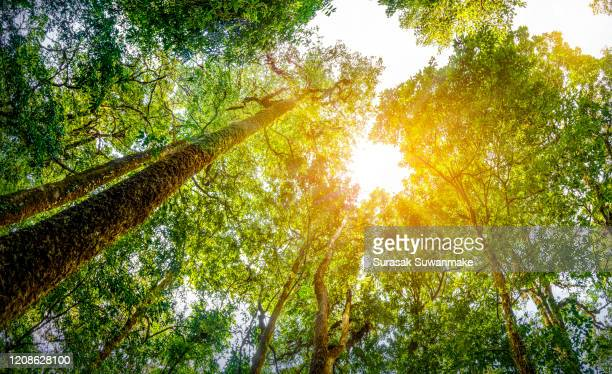 concept of earth protection day or environmental protection hands to protect the growing forest - giornata mondiale della terra foto e immagini stock