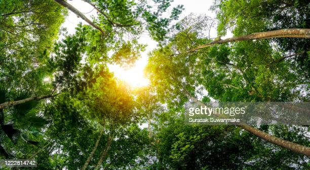 concept of earth protection day or environmental protection hands to protect the growing forest - earth day stock pictures, royalty-free photos & images