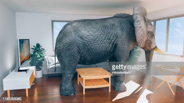 concept of living in a small house and wanting to move to something bigger - elephant stock pictures, royalty-free photos & images
