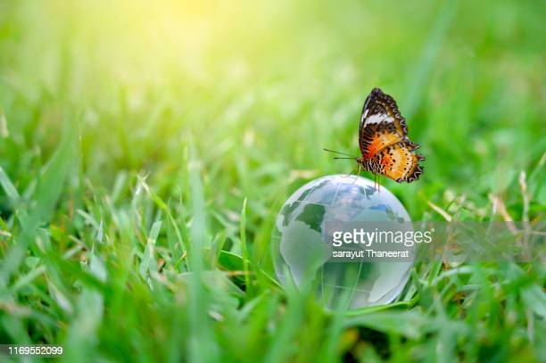 concept save the world save environment the world is in the grass of the green bokeh background - ecosystem stock pictures, royalty-free photos & images