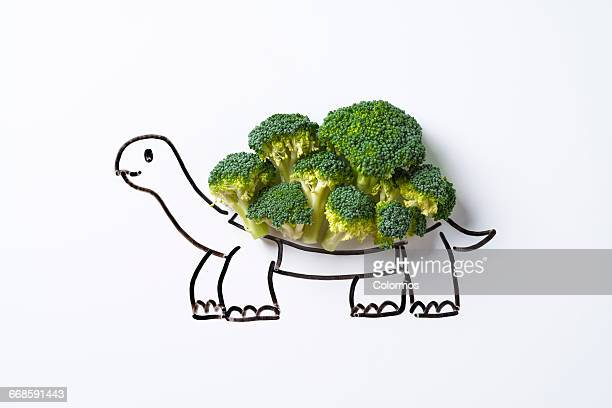 Concept sketch of turtle with broccoli