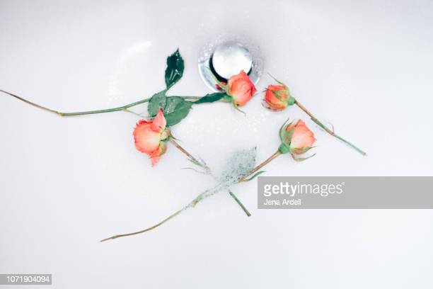 concepts breakup, conceptual breakup, breakup no people, discarded, roses, flowers, sink drain, down the drain - jena rose stockfoto's en -beelden