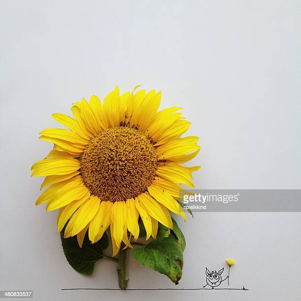 Conceptual character standing by a sunflower holding a buttercup