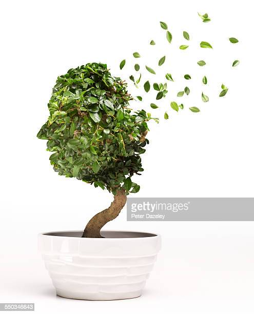 Conceptual image of Bonsai tree depicting Alzheime