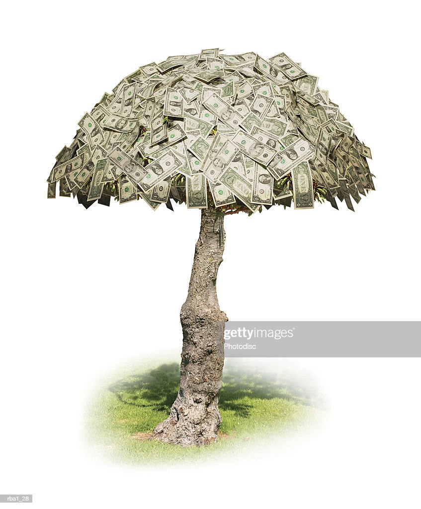 conceptual photo of money actually growing on trees : Stock Photo