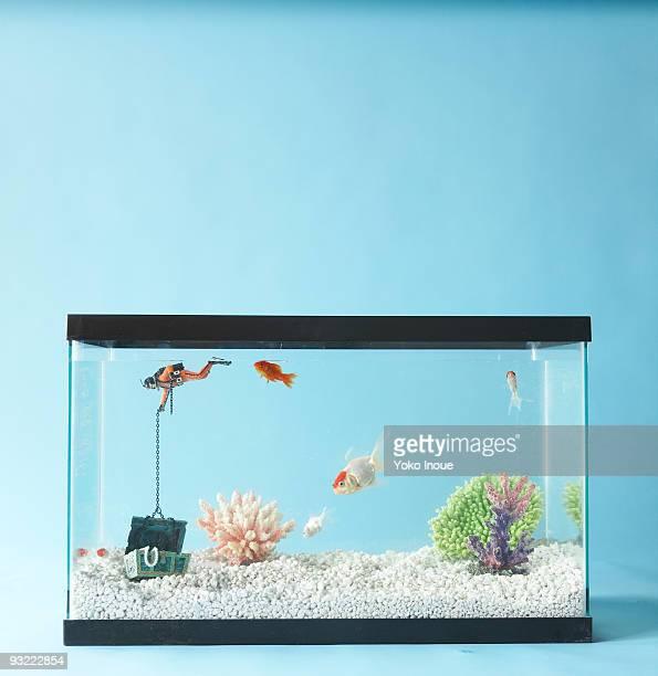conceptual still - aquarium stock pictures, royalty-free photos & images