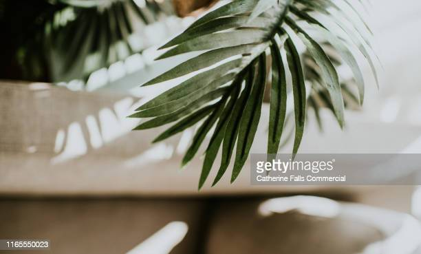conceptual sunny environment - soft focus stock pictures, royalty-free photos & images