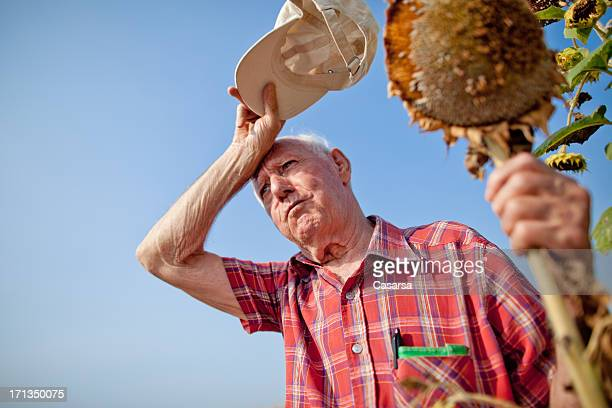 concerned farmer - heat stock pictures, royalty-free photos & images