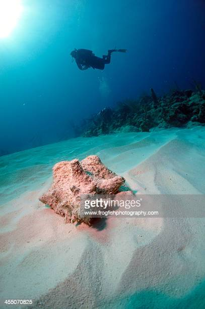 conch diver - turks and caicos islands stock pictures, royalty-free photos & images
