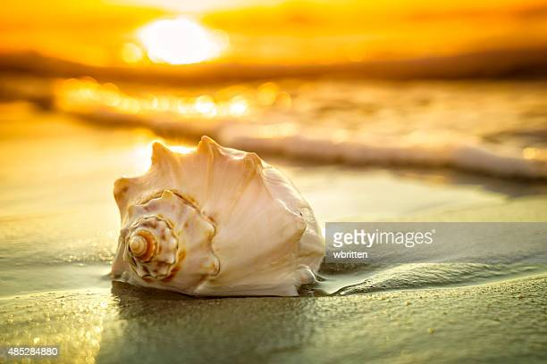 Conch shell, sunrise and ocean waves