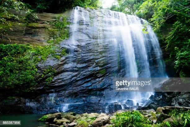 concord waterfall, grenada, west indies - paisajes de isla de  granada fotografías e imágenes de stock