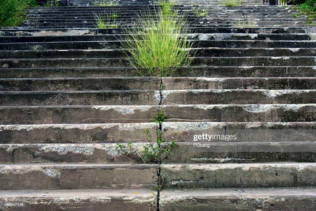 Concrete stairs : Stock Photo