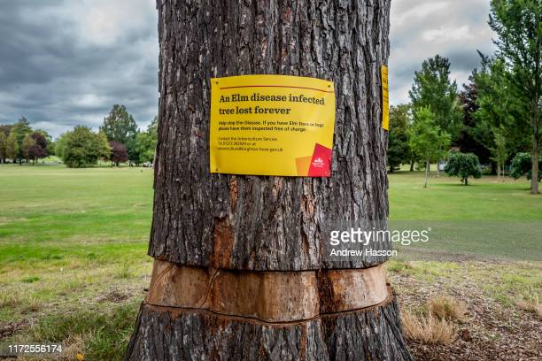 A condemned elm tree in Preston Park on September 03 2019 in Brighton England