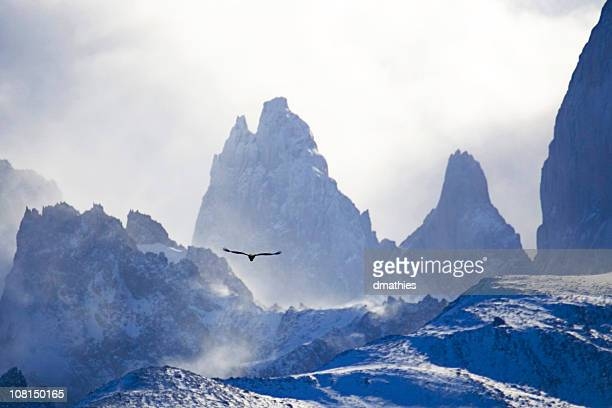 Condor Flying Towards El Chelten Snow Covered Mountain