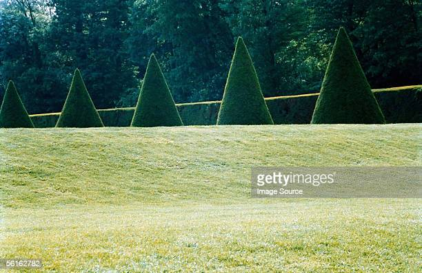 Cone shaped topiary