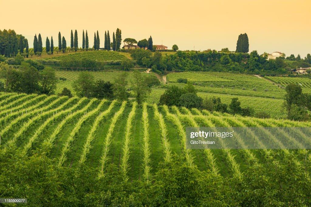 Conegliano Veneto-Collabrigo-die Prosecco-Hügel : Stock-Foto