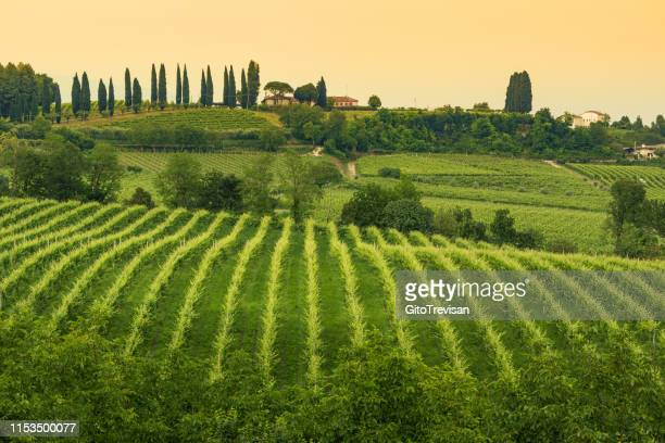 conegliano veneto - collabrigo - the prosecco hills - veneto stock pictures, royalty-free photos & images