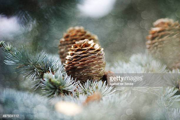Cones on a blue Christmas tree