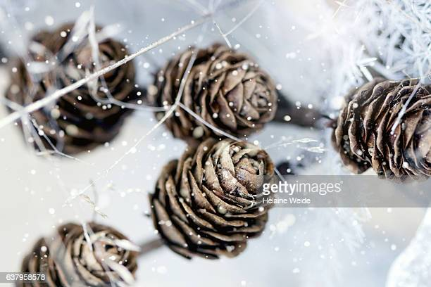 cones - pinecone stock pictures, royalty-free photos & images
